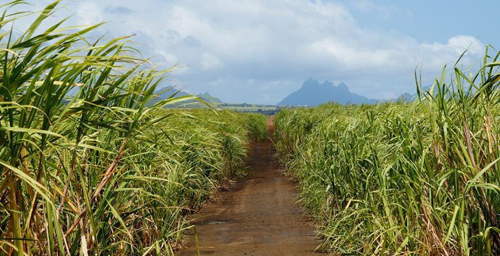 Mieux comprendre le contexte et l'objectif du 'Joint Technical Committee Report' sur l'industrie sucrière